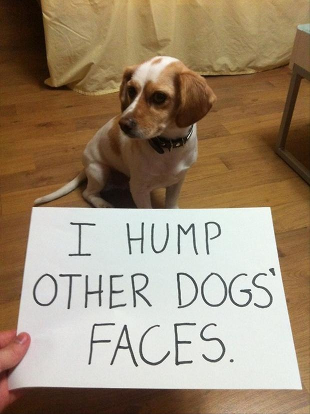 1 dog shaming, funny pictures (3) - Dump A Day