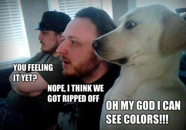 [Image: 2-funny-on-drugs-pictures1.jpg]