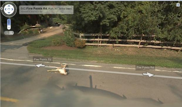 funny google map pictures (8)
